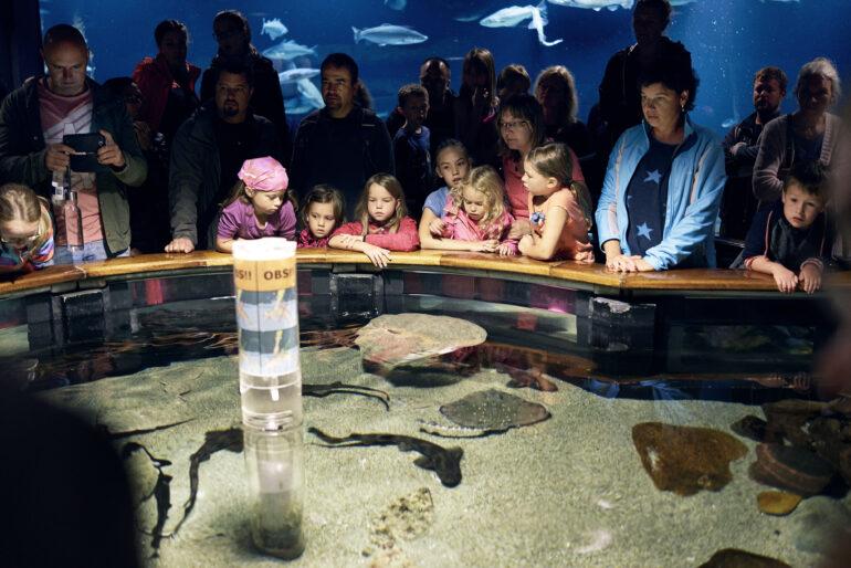 Vandede aktiviteter på Fiskeri- og Søfartsmuseet